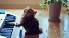 Anh dong vat Ảnh mèo con dễ thương nhất