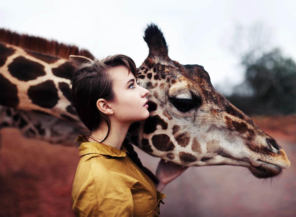 giraf med lang tunge
