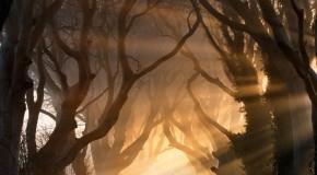 Anh girl xinh Ảnh đẹp thiên nhiên trong sương mù