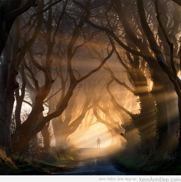 Ảnh đẹp thiên nhiên trong sương mù Anh-dep-thien-nhien-600x602