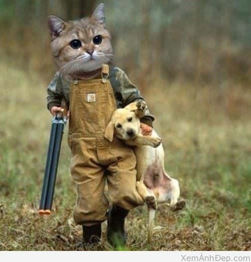 hình ảnh hài hước vui nhộn của mèo và chó