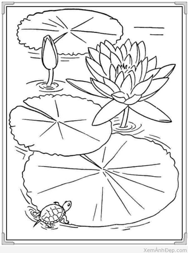 Tranh to mau hoa qua cho be de thuong hoa sung